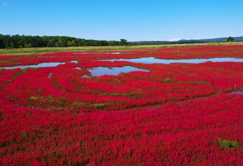 能取湖的珊瑚草