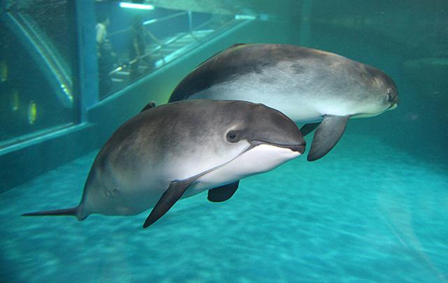 小樽水族館 2021年3月20日 通常營業開始